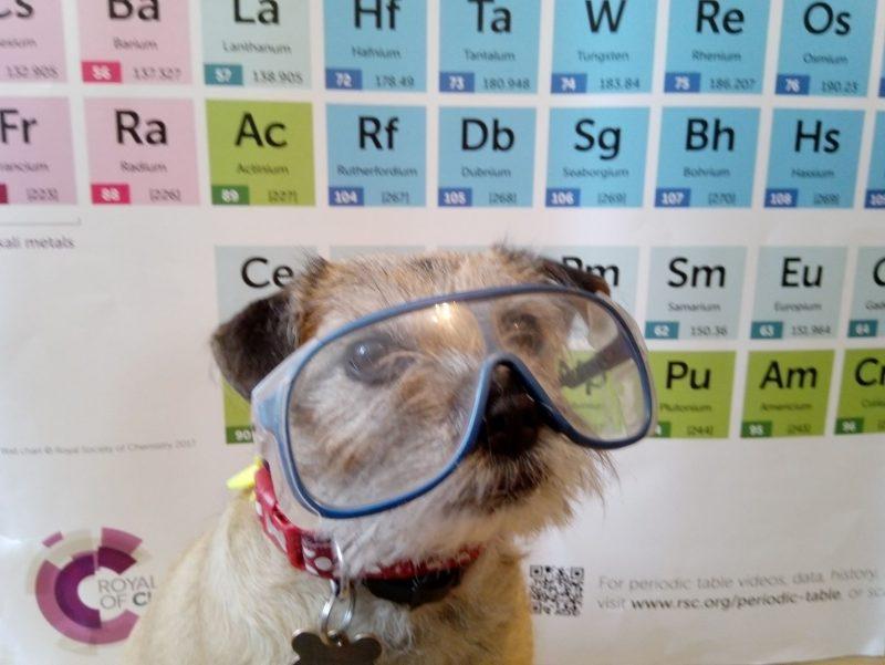 Belle the chemistry dog